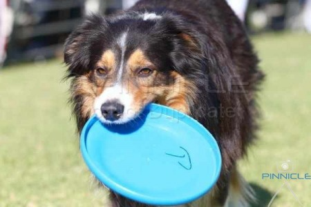 Border Collie Club Fun Day - 5th July 2015