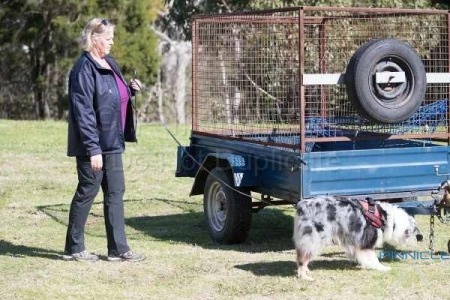 K9 Nose Time - Sniff N Go - Pre Trial  - Castle Hill NSW - 4 September 2016